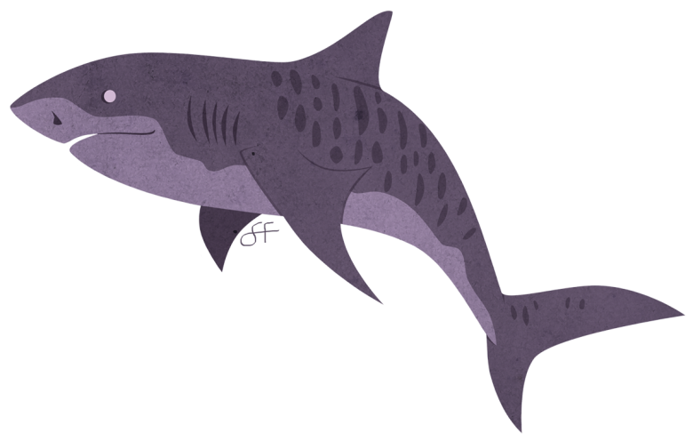 5__tiger_shark_by_lilowlaroo-d7v9u6i